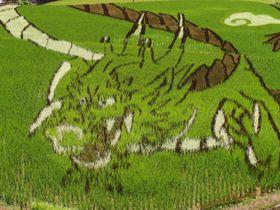 熊本県上天草市に、田んぼアート「下り龍」が出現!