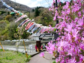 那須塩原「板室温泉」5月の風物詩!100匹の鯉のぼりが那珂川を泳ぐ|栃木県|トラベルjp<たびねす>