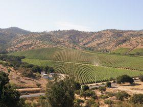 サンティアゴ近郊「マテティック」チリワインの銘醸地で楽しむ一歩先を行くワイナリー