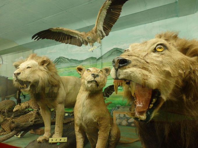 剥製から神秘の人体標本まで!岡山「つやま自然のふしぎ館」