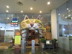 4千以上の猫グッズ大集合!「猫博物館」マレーシア・クチン