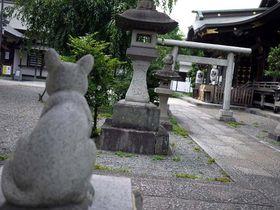 迷い猫が戻ってくる?!不思議な『猫返し神社』(東京・立川)|東京都|[たびねす] by Travel.jp