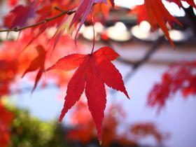 穴場!京都・嵐山の紅葉散歩道「宝厳院〜望京の丘」