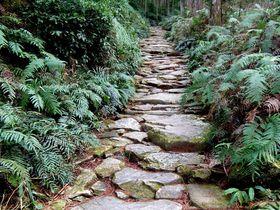 中世の熊野詣を実体験!風情ある石畳が美しい熊野古道・馬越峠を歩く