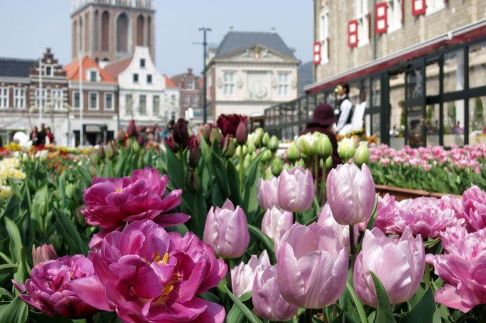 春の訪れを告げるチューリップ祭「長崎・ハウステンボス」