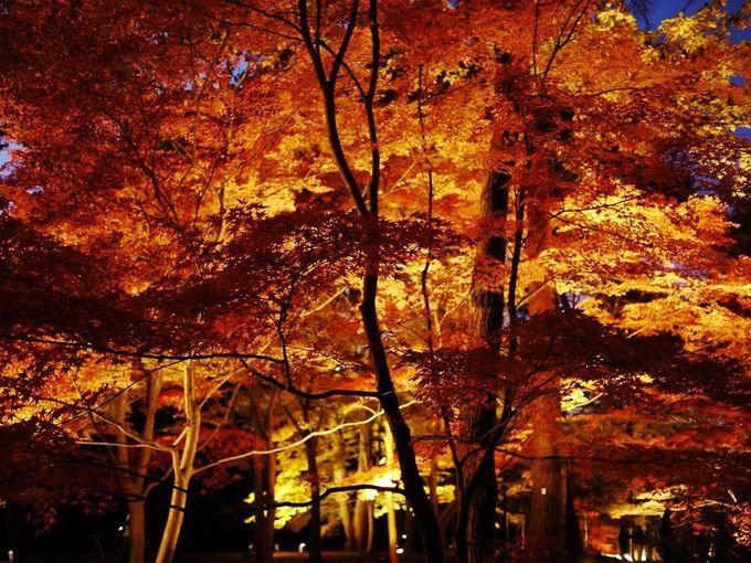 2015年も開催!秋夜に輝く幻想的な紅葉!武蔵丘陵森林公園「紅葉見ナイト」(埼玉)