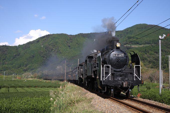 蒸気機関車の里といえばココ「大井川鐵道のSL」
