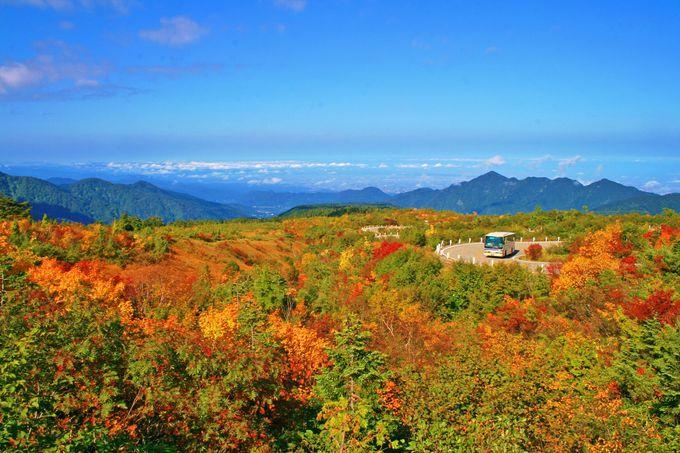 [紅葉]立山黒部アルペンルート 人気の富山側日帰り往復ガイド