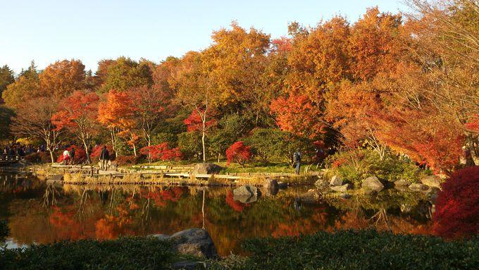 都心からのアクセスも良好!都内の敷地面積No.1の紅葉スポット「国営昭和記念公園」(東京)