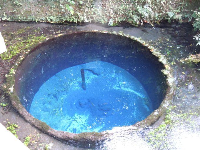 コバルトブルーに輝く富士の天然水「柿田川」(静岡県)