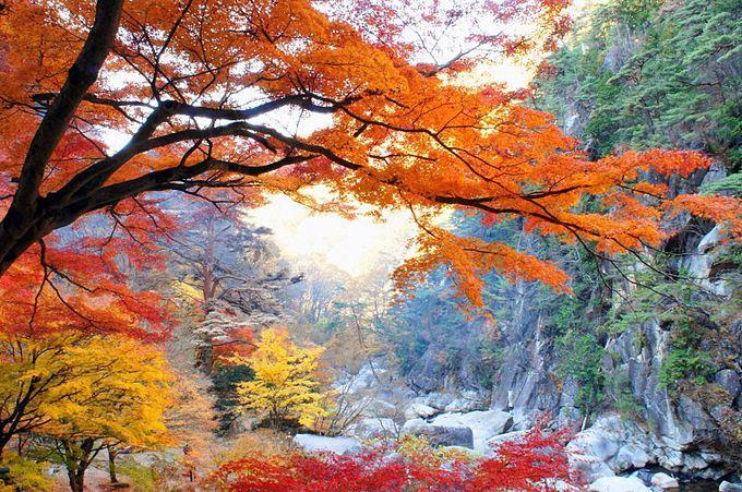国の特別名勝!秋が彩る圧巻の渓谷美「御嶽昇仙峡」(山梨)