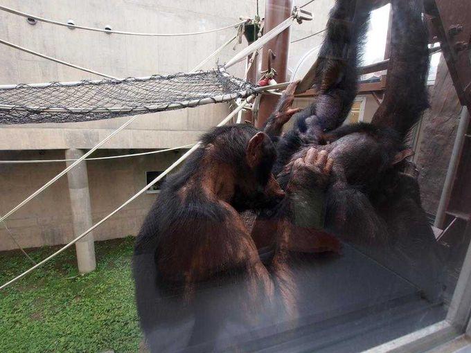 近い!動物たちの目の動きまで見えるほど「旭山動物園(北海道)」