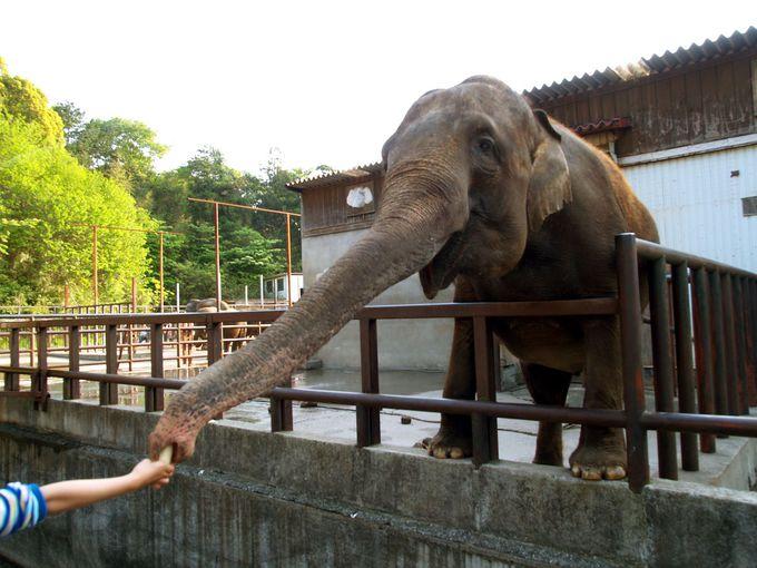 ゾウ好きによる、ゾウ好きのための「市原ぞうの国(千葉)」