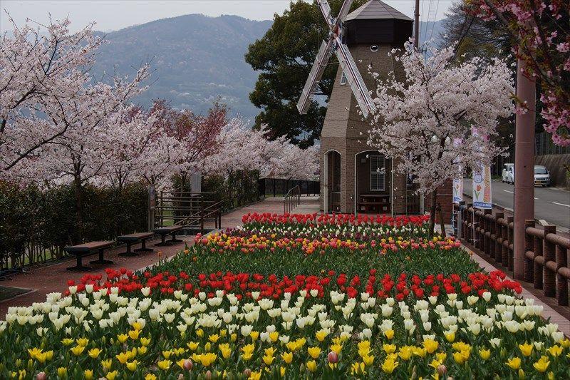 歴史感じる街を彩る様々な花「徳島県美馬市・うだつの町並み」