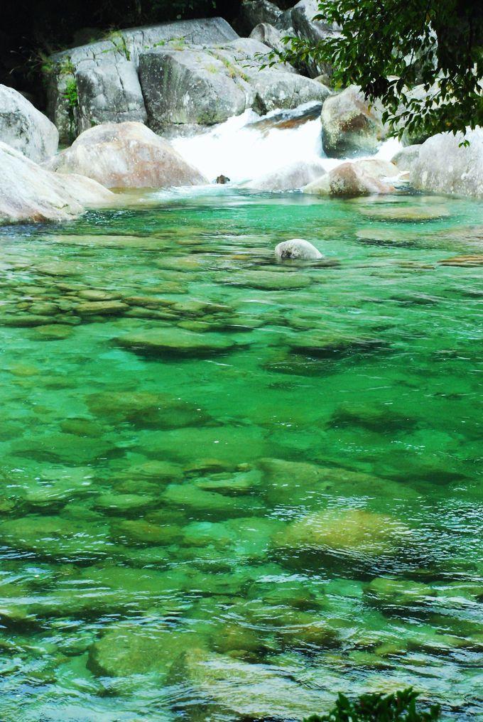 魚が棲めない程の透明度!神々が宿る屋久島の清流「横河渓谷」(鹿児島県)