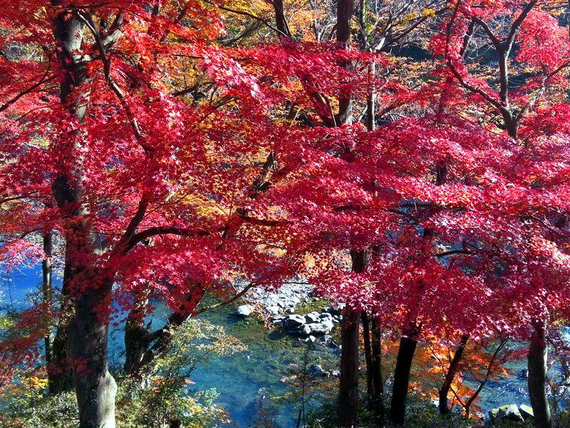 京都の紅葉を埼玉で!?紅葉と渓谷が彩る美空間「嵐山渓谷」(埼玉)
