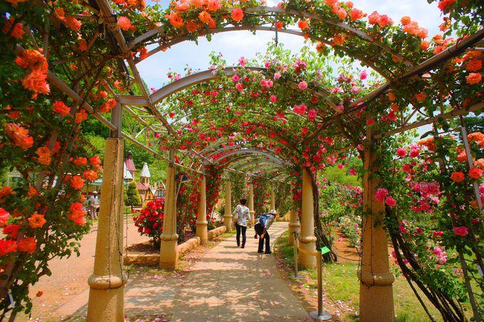日本一長いバラの回廊「フラワーセンター・ハイジの村(山梨)」