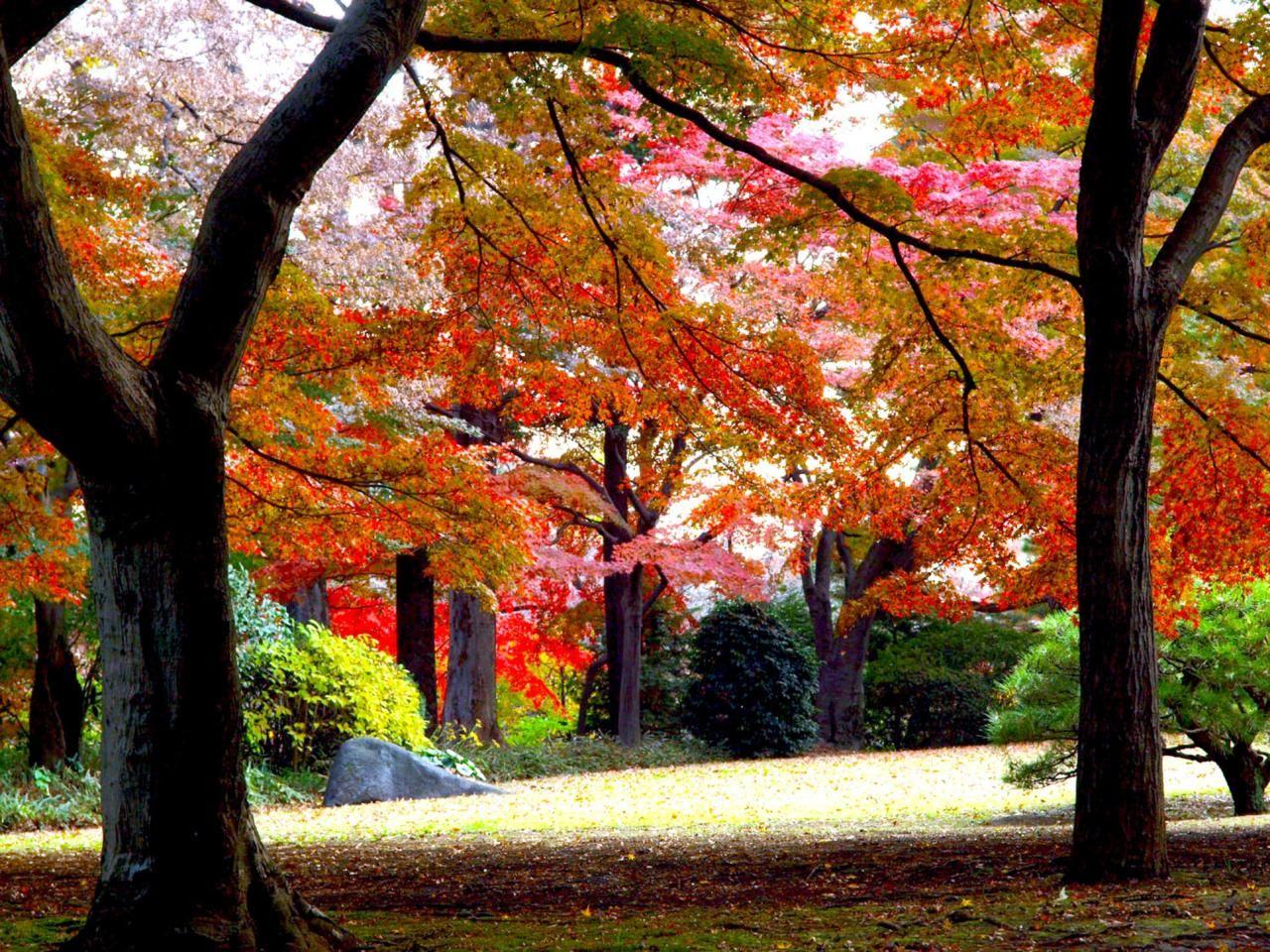 都内から好アクセス!燃えるように朱い紅葉が咲き誇る「殿ヶ谷戸庭園」(東京)