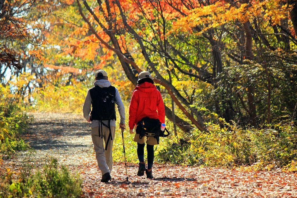 皇族方ご静養の地!神聖な山道を紅葉ハイキング「那須平成の森」(栃木)