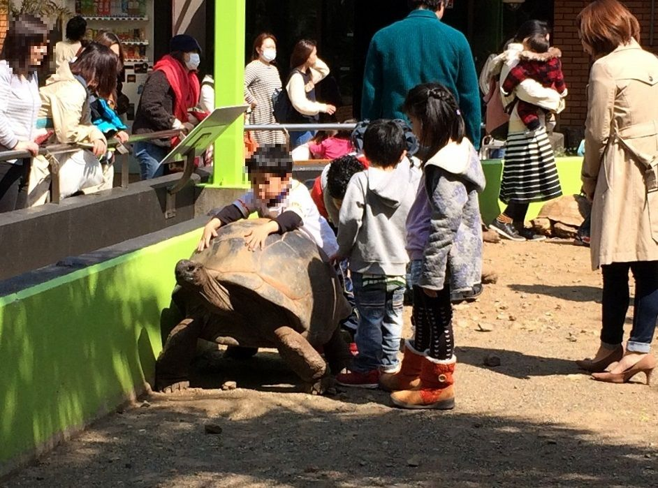 ゾウガメに乗れる!伊豆・体感型動物園「iZOO(静岡)」
