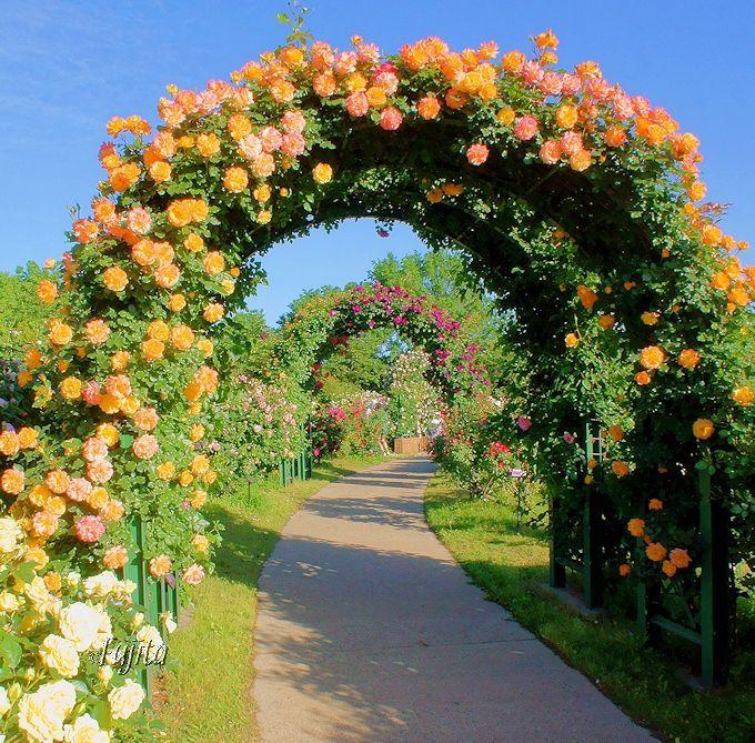 一年中楽しめる!日本を代表するバラ園「京成バラ園(千葉)」