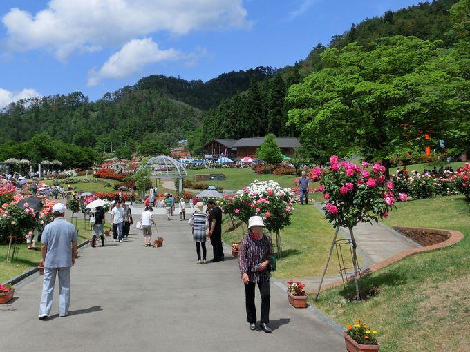 プロポーズにふさわしいロマンチックなバラ園「東沢バラ公園(山形)」