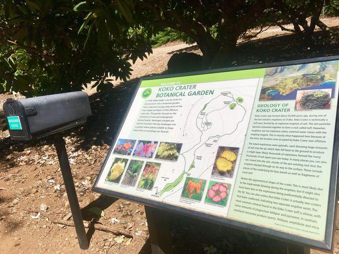 ココクレーター植物園は無料!日が昇ってから沈むまで開いてます!