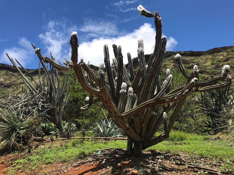 ハワイで穴場のフォトジェニックなパワースポット、ココクレーター植物園