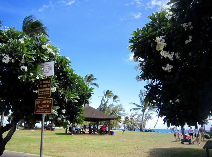 世界一雨が多い島、ガーデン・アイランド(庭園の島)・カウアイ島