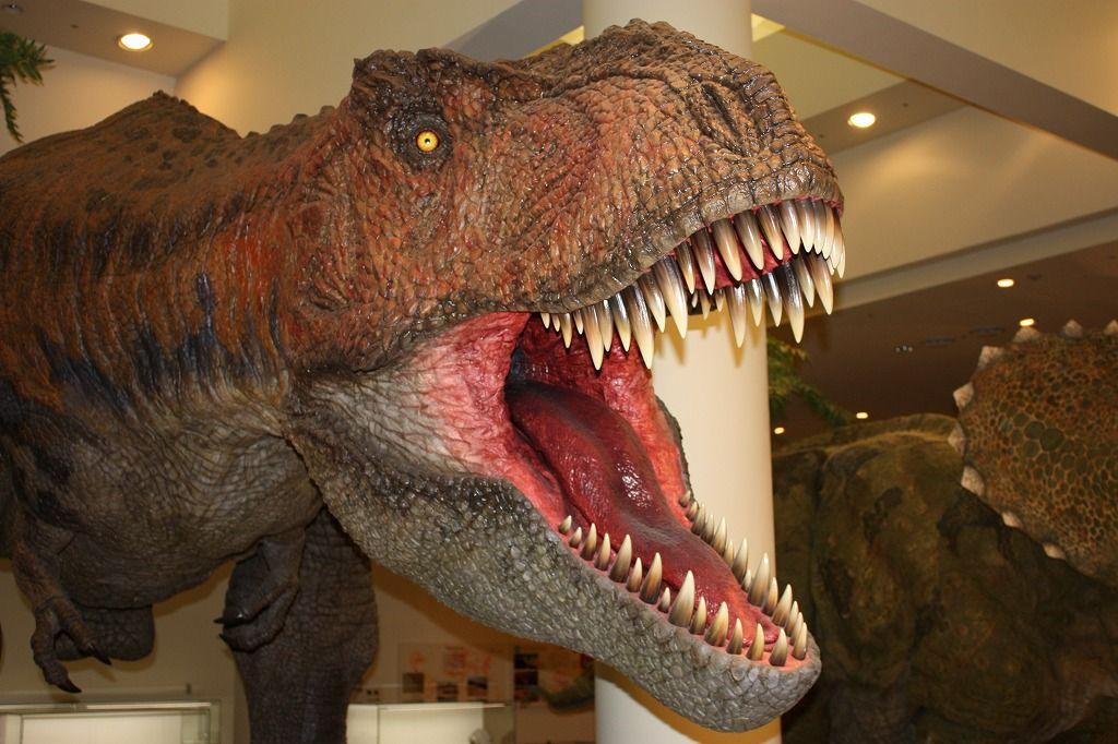 「自然館」のメイン展示は文句なしに、、、これだ!