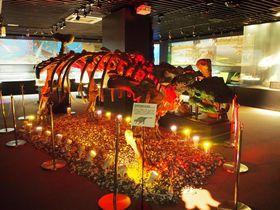 見て、触って、泊まって!?「奥出雲多根自然博物館」でまるごと楽しむミュージアム|島根県|トラベルjp<たびねす>