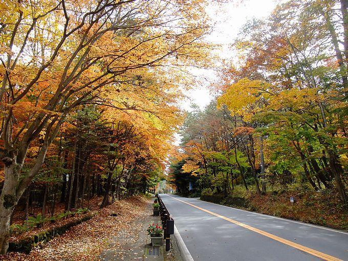 秋の風と空気を感じながら、ロマンチックな紅葉のトンネルを歩いてみましょう!