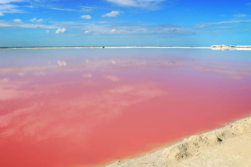 「ピンクの海 メキシコ」の画像検索結果
