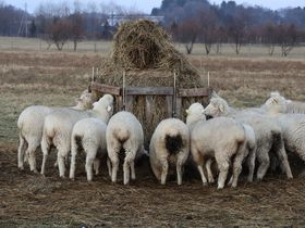 羊を見ながらイタリアンを堪能!北海道えこりん村「らくだ軒」