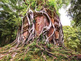 カンボジアの森に眠る古代都市「イシャナプラ」(サンボー・プレイ・クック)探訪