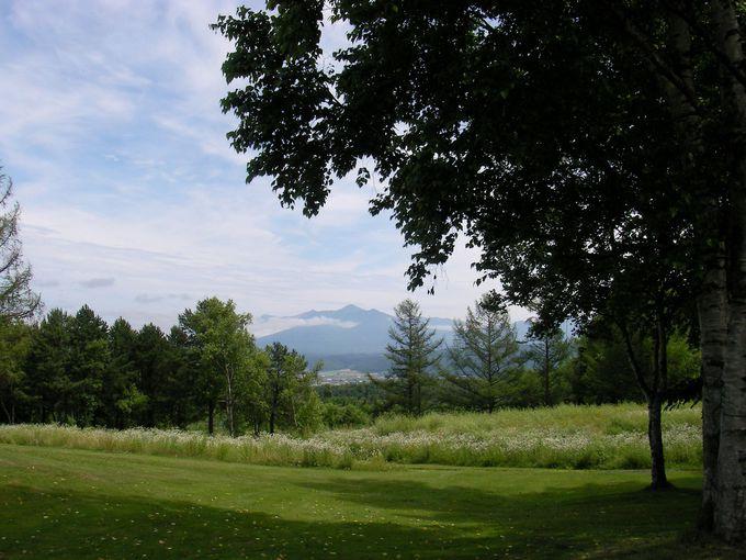 木々の間に見える十勝岳連峰