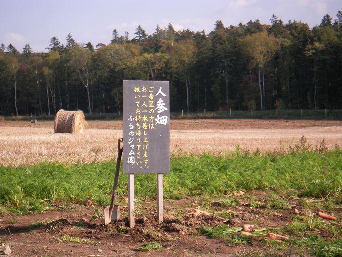 「農場」ならではの風景