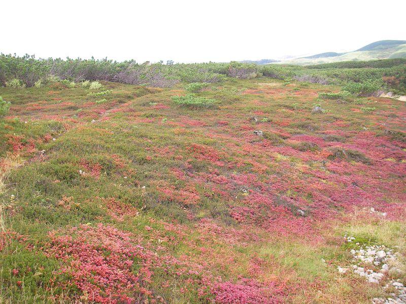 北海道で季節を先取り!日本一早い紅葉と雪まで楽しむ「旭岳」の秋