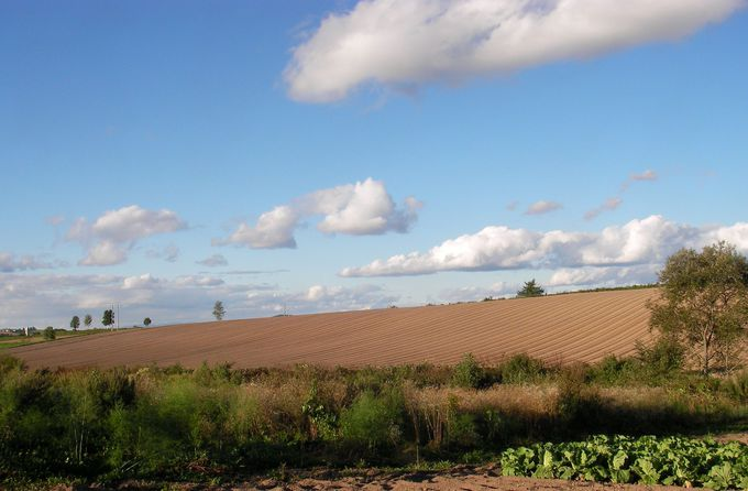 収穫後の畑に感動