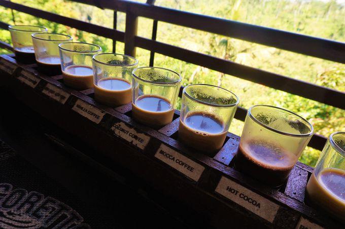 インドネシア特産ルアク・コーヒーの飲み比べ