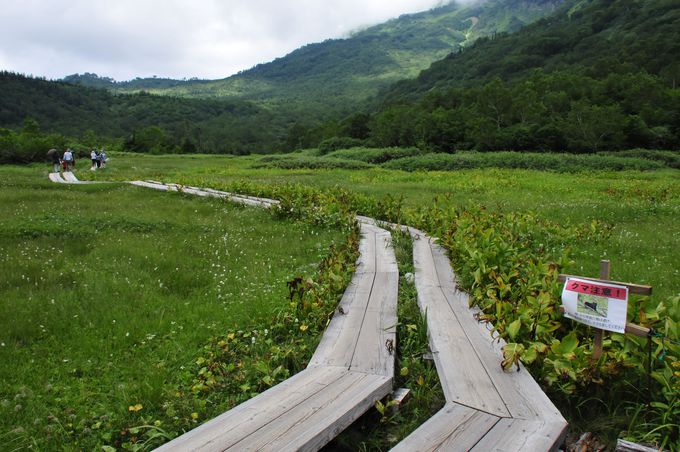 栂池自然園の木道と遊歩道