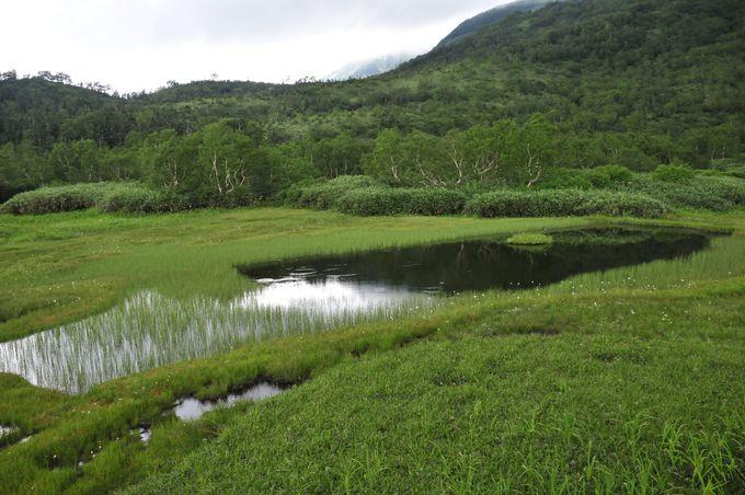 浮島湿原の池