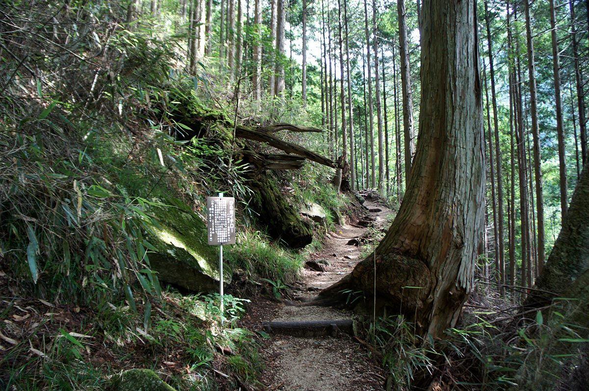 名前のついた木々の中を歩く