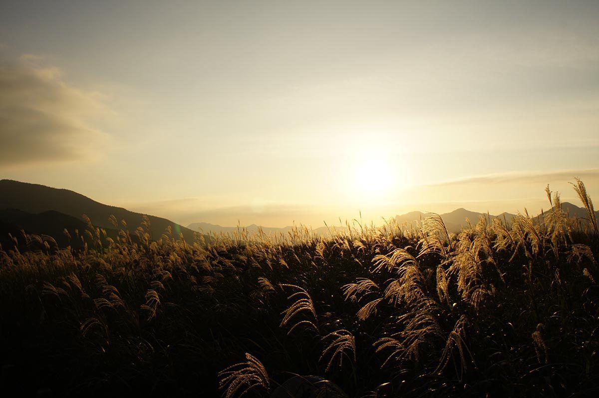 陽が傾き草原は幻想的な風景に変わる