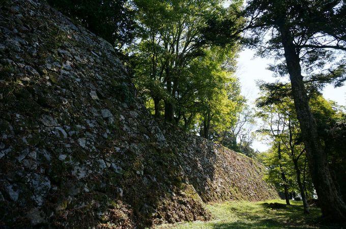 木々に覆われた城跡