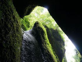 緑の洞窟に落ちる神秘の滝 〜シワガラの滝(兵庫県新温泉町)