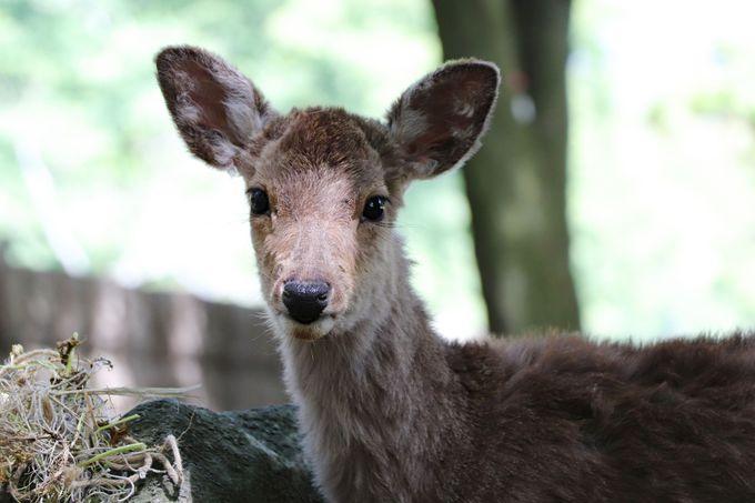 遭遇率高め!奈良公園・鹿とふれあえるおすすめスポットはココ