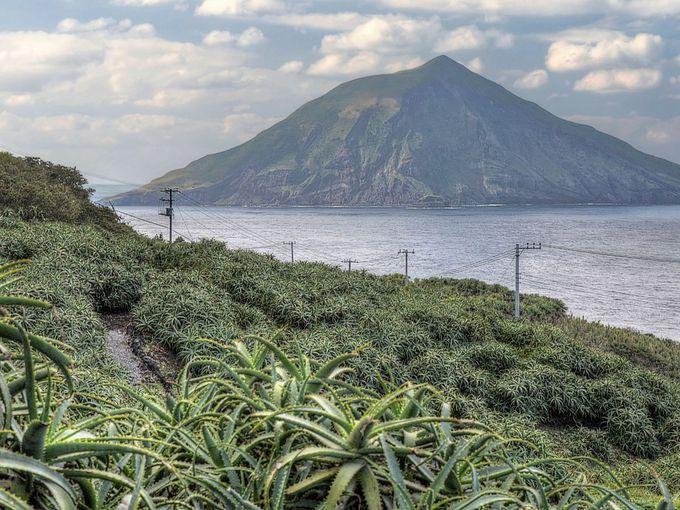 大越アロエ園と八丈小島の景観は圧巻!