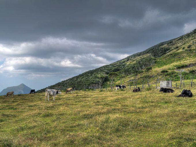 かつては酪農の島だった八丈島