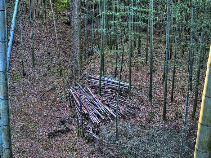 堀が状態よく残る谷津山尾根筋北西部(城下から稲荷森)
